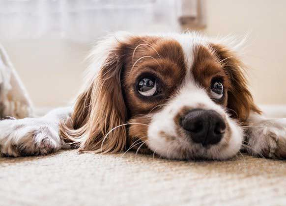 Dog theft in the UK