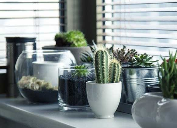 5 Reasons Why House Plants are the Best Housewarming Gift