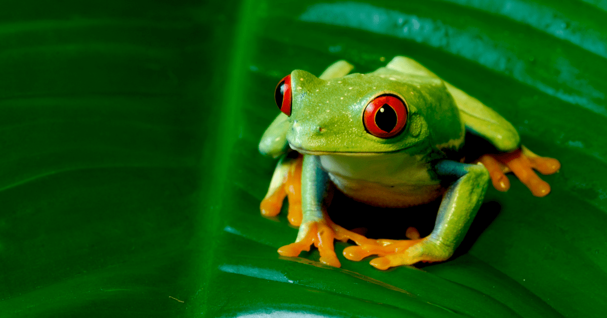 Why every Busy Vet Should Eat a Frog